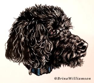 BW, My puppy